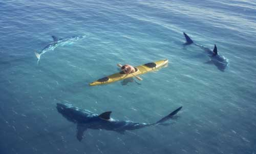kayaking-with-ocean-animals